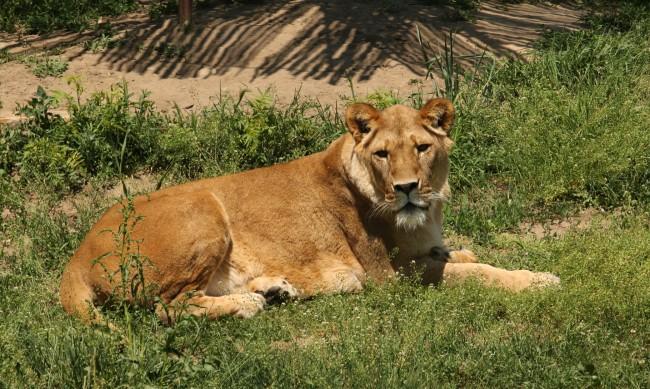 Онлайн петиция заради лошите условия в зоопарковете у нас