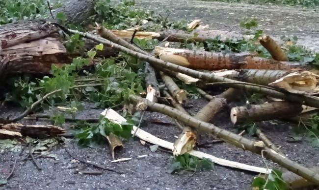 Дърво е паднало върху дете в парк в Пловдив