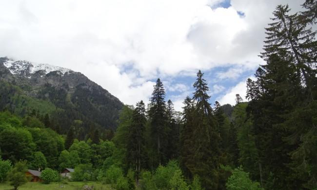 Инициатива за опазване на старите гори в България с награда от ЕК