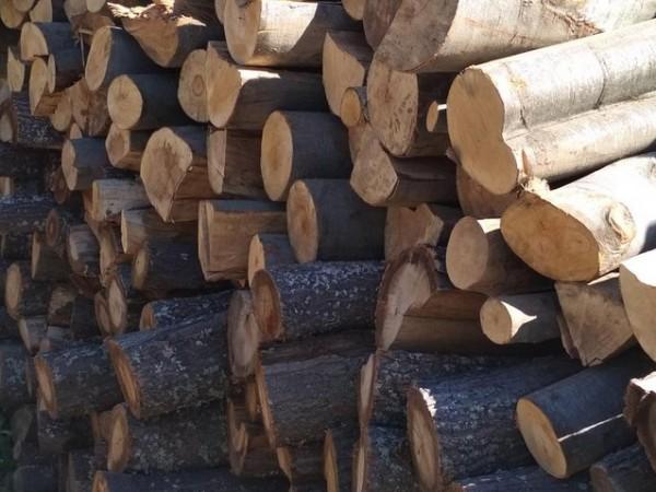 За последните 5 години използването на дърва за огрев е