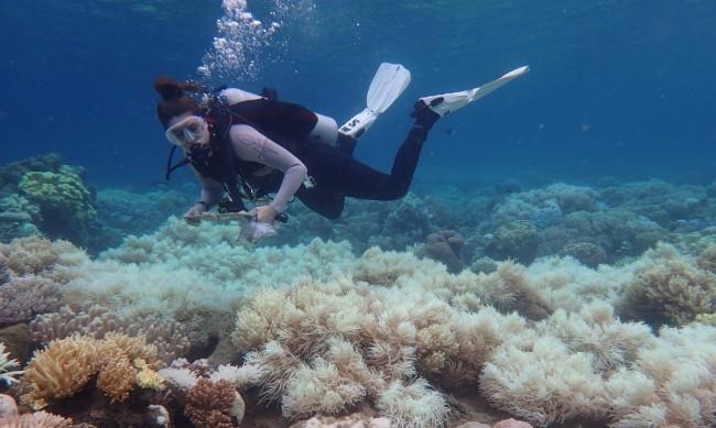 Учени от Австралия откриха нов коралов риф