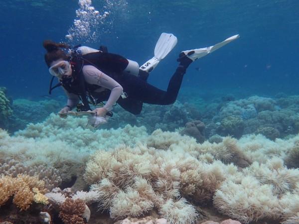 Австралийски учени са открили масивен нов коралов риф, по-висок от