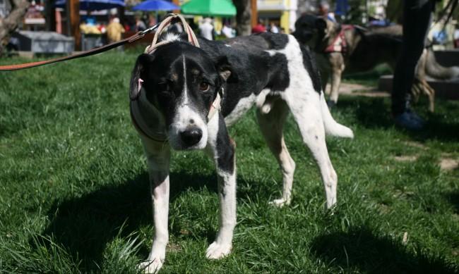 30% повече осиновени кучета по време на карантината
