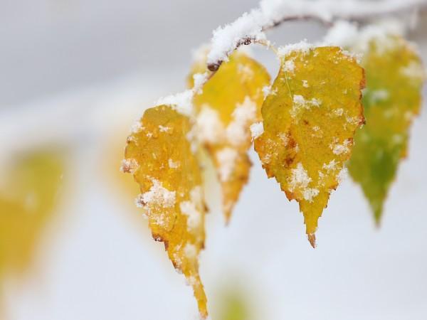Тази година най-вероятно ще се окаже най-топлата за Северното полукълбо.
