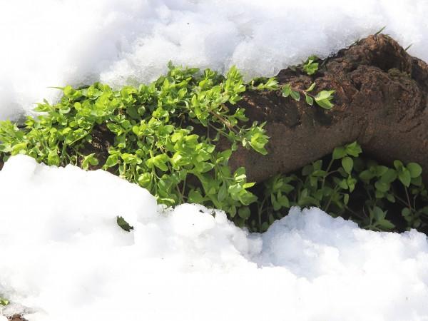 Първият сняг в Предбалкана и по високите полета на Западна