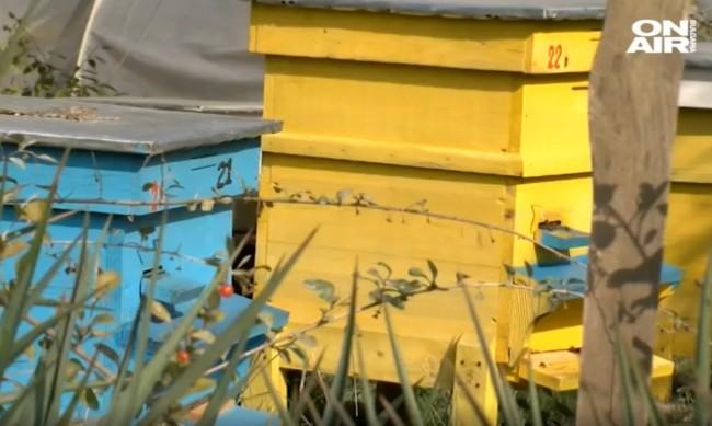 Огромно търсене на мед, но нулева година за пчеларите