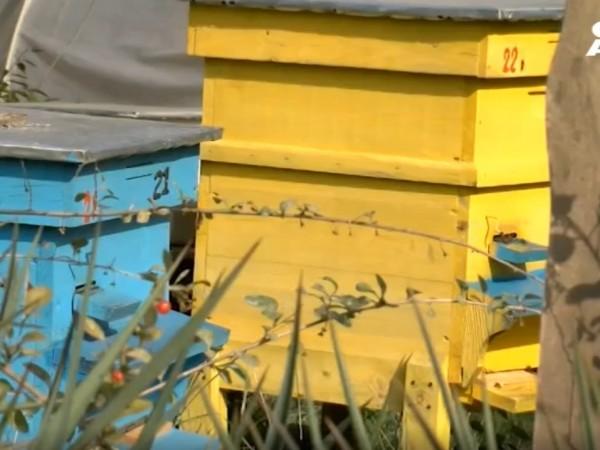 Огромно търсене на пчелен мед се регистрира тази година заради