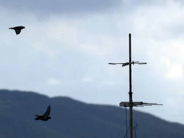 Две малолетни момчета са задържани за кражба на гълъби в