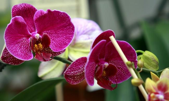 От благодарност: 50 орхидеи за 50 медици от ИСУЛ