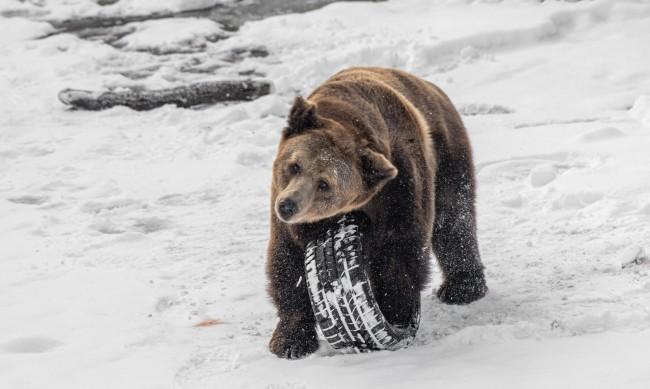 На Мечкинден: 7 мечки в зоопарка в София, само една не спи