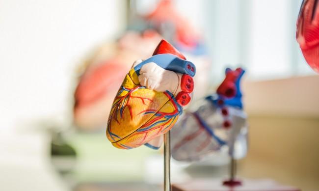 Доц. Генова: Все повече данни има, че COVID-19 уврежда сърцето