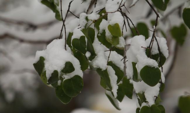 Астрономическата зима настъпва в 12.02 ч. днес