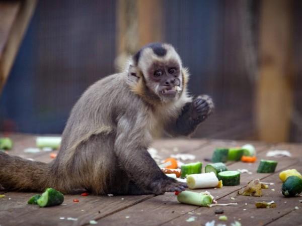 Зоологическа градина в София ще работи без почивен ден по