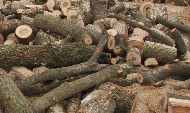 Горски служител наби мъж с незаконно добити дърва за огрев