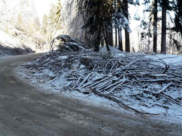Снимка: АПИПродължава разчистването на падналите и пречупени дървета и клони