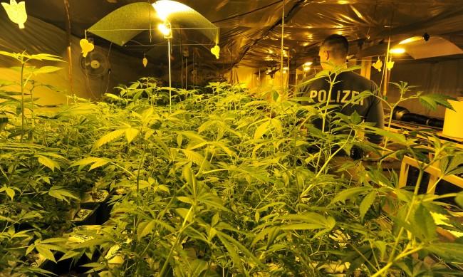 Криминалисти разбиха наркоферма в хотел в Слънчев бряг