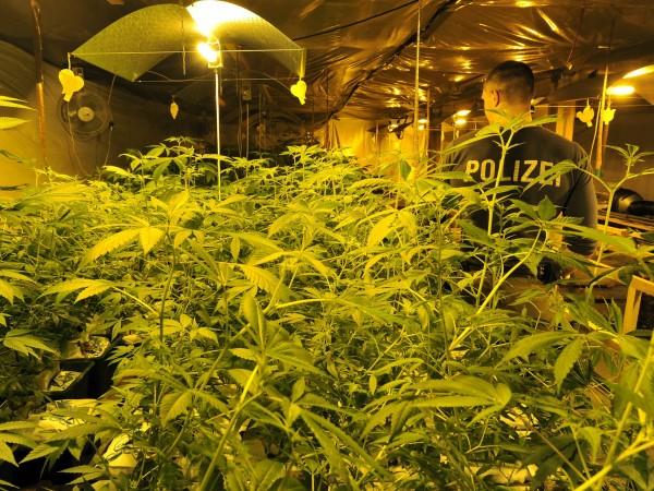 Криминалисти от Бургас и полицаи от Несебър разбиха наркоферма за