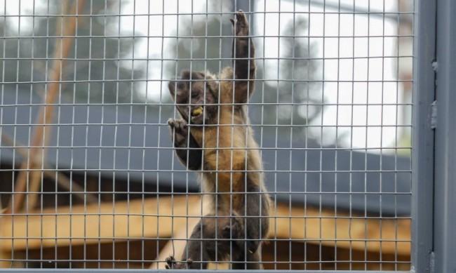Жена подхвърли храна на  маймуна в зоопарка и я прати в клиника