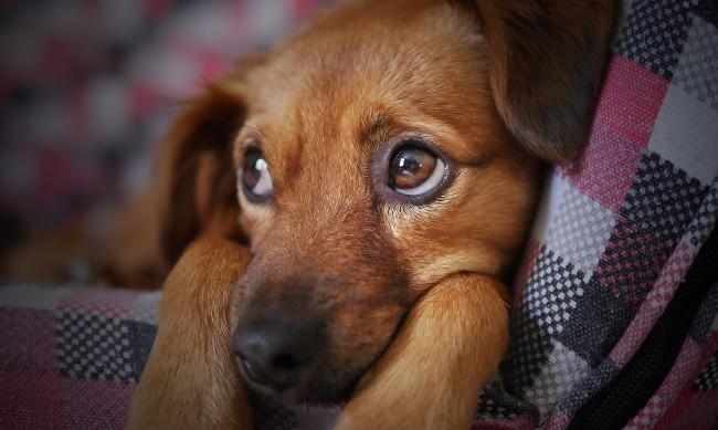 Отчитат ръст на осиновените кучета в София през 2020 г.