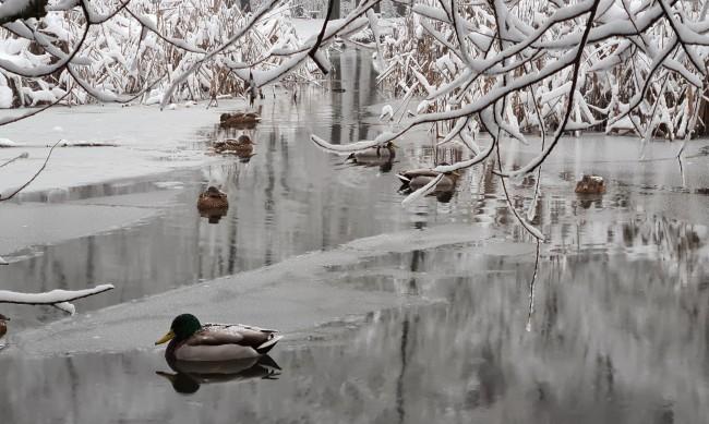 Времето през Февруари: От студ до жега с 22 градуса