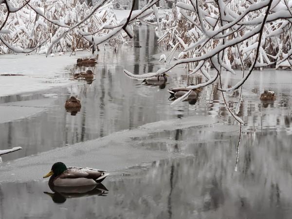 Тази година се очаква средната месечна температура през февруари да
