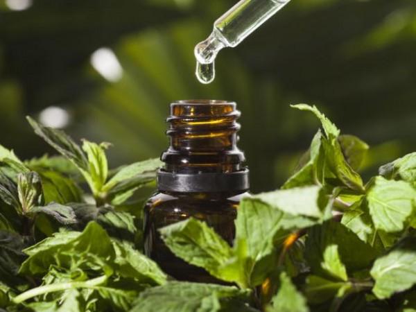 Ментовите растения се използват в традиционната медицина от векове, включително
