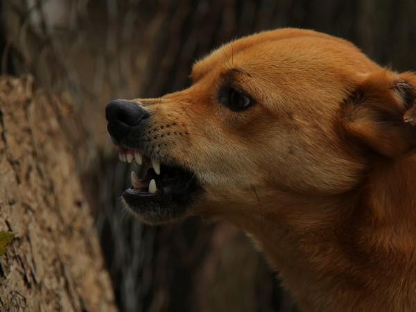 Бездомни кучета нападат хора в Перник. Наскоро са проникнали в