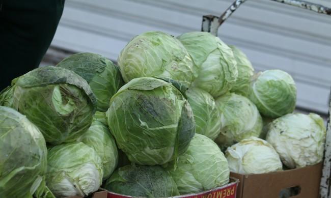 Над 5 тона зеле раздаде безплатно агроном от Каварна