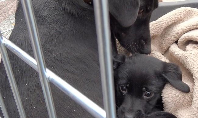 Жители на село против построяването на кучешки приют