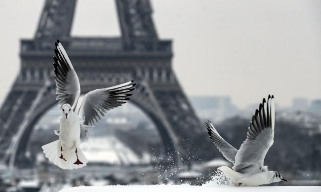 """Птичият пазар в Париж до """"Нотр Дам"""" ще бъде закрит"""