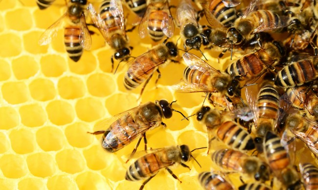 БАБХ стартира проверки на пчелните семейства в цялата страна