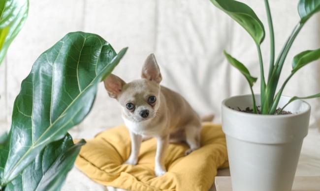 Любимо растение според зодията - вижте кое е вашето!