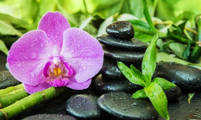 6 растения, които носят късмет в дома