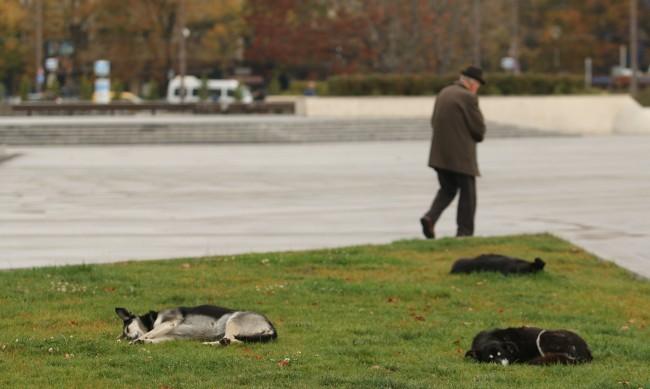 Изоставените кучета - с 30% повече след пандемията