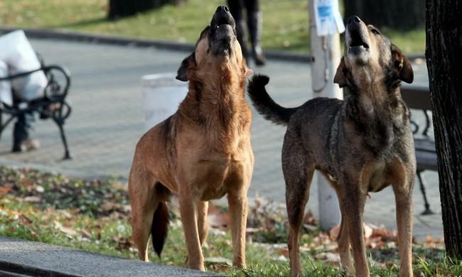 Зачестяват сигналите в Helpbook за бездомни и агресивни кучета