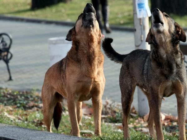 Според действащите нормативни уредби грижата за бездомните кучета е работа