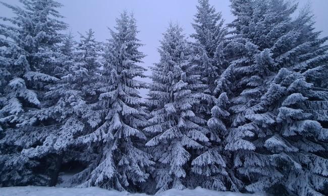 Студено и ветровито, максималните температури стигат 12 градуса