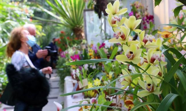 Рози, зюмбюли, лалета: Двойно по-високи цени на цветята на 8-ми март