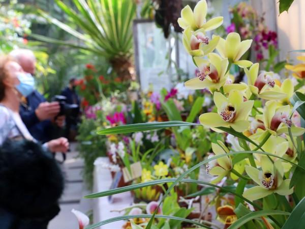 Най-скъпо-струващите цветя ще купуваме на тазгодишния 8-ми март. Причината била