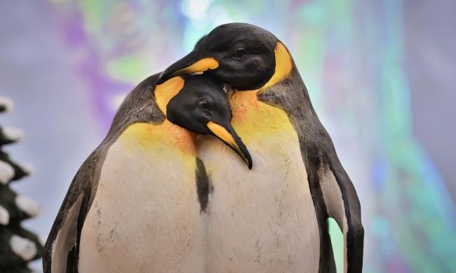 Ваксини и за пингвините в норвежкия град Берген