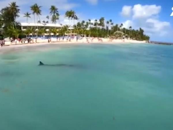 Спасиха заседнал кит в Доминиканската република. Красивото животно е преминало