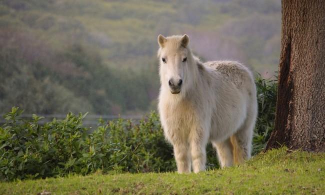 Жена откри ирландското си пони мъртво