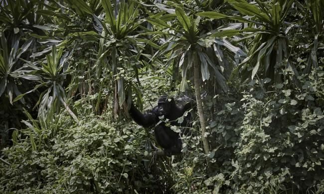 Новата пандемия - въпрос на време: Пушени маймуни, прилепи, костенурки...