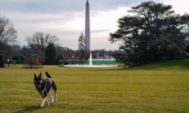 Кучетата на Байдън ухапали човек, отпратиха ги от Белия дом