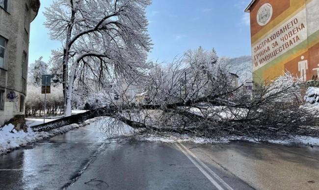 Паднало дърво блокира централна улица в Шумен