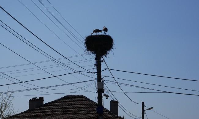 Първите щъркели се появиха в кубратското село Божурово