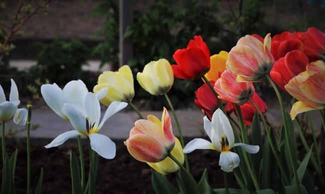 13 април - най-топлият ден за месеца, градусите скачат до 25°C