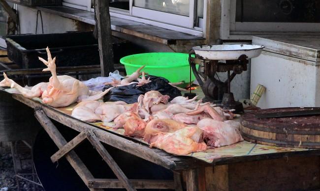 Дивите животни били причина за 70% от инфекциозните болести