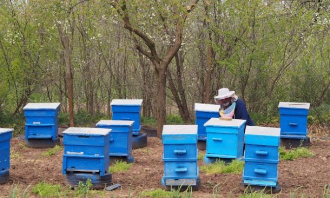 Работна група анализира повишената смъртност при пчелите