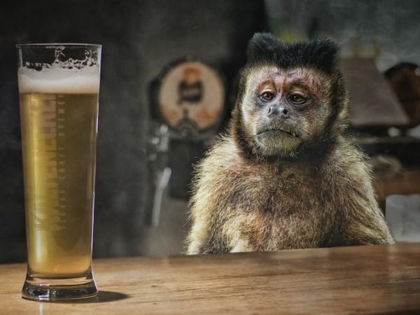 """Маймуна алкохолик в Северна Индия получи доживотна присъда, съобщава """"The"""